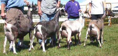 Agree, nubian goat sperm for sale message